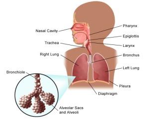 Obat Herbal Bronkitis Pada Anak